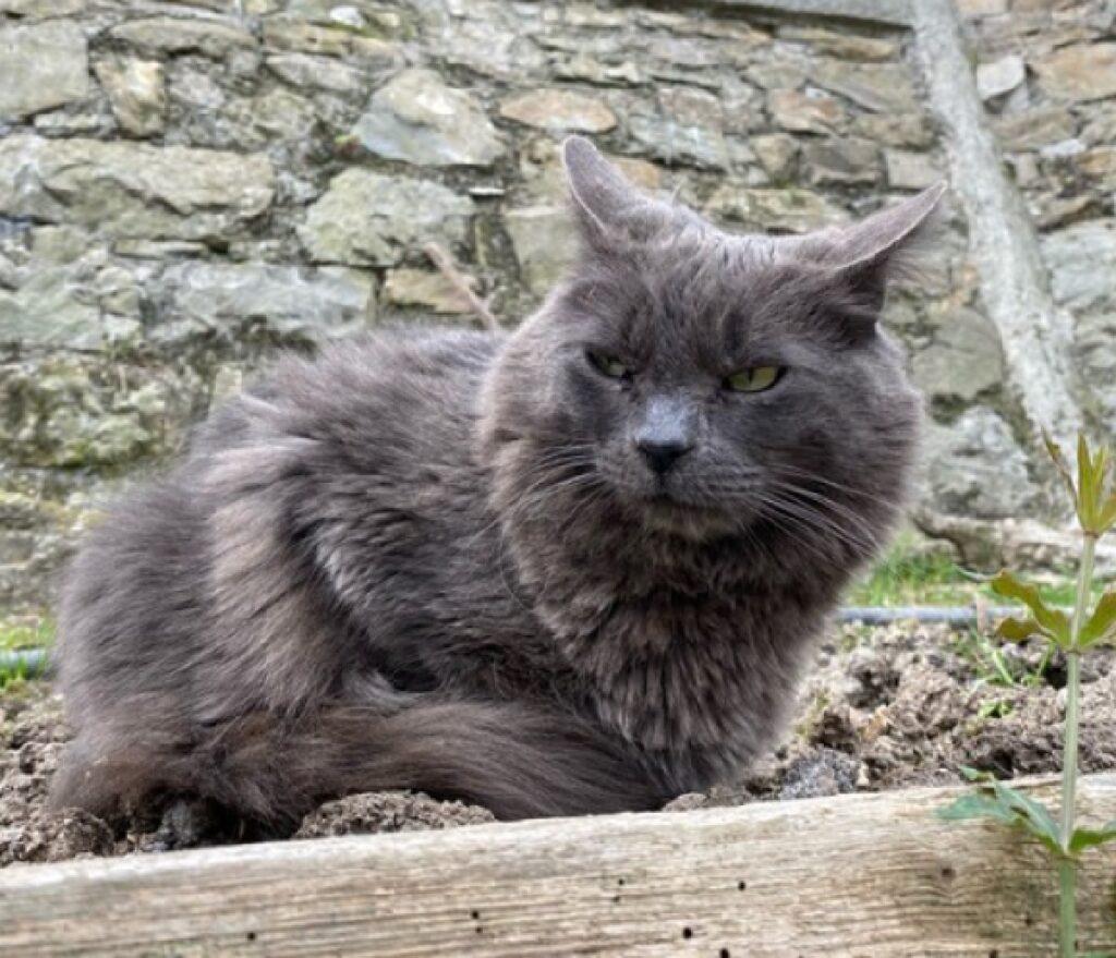 gatto davanti muretto in pietra