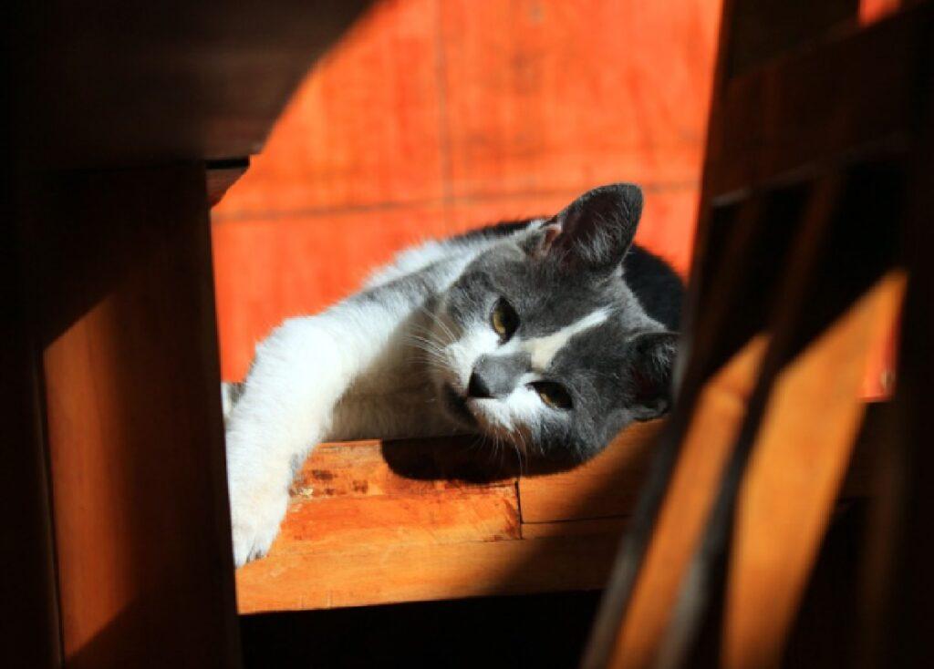 gatto libertà sfondo arancione