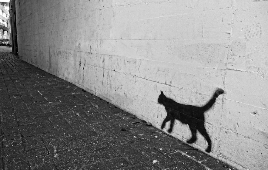 gatto nero graffito scomparso