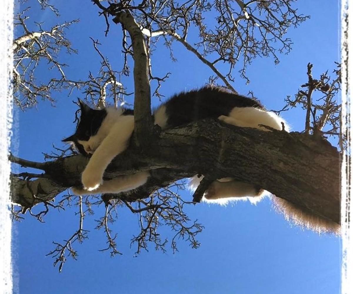 gatto si regge al ramo