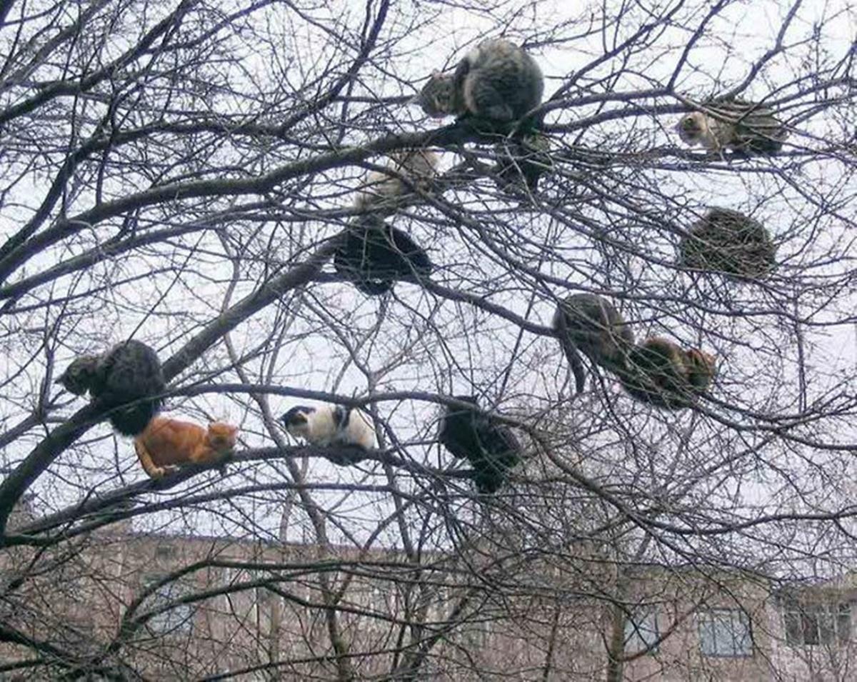 gatti sull'albero
