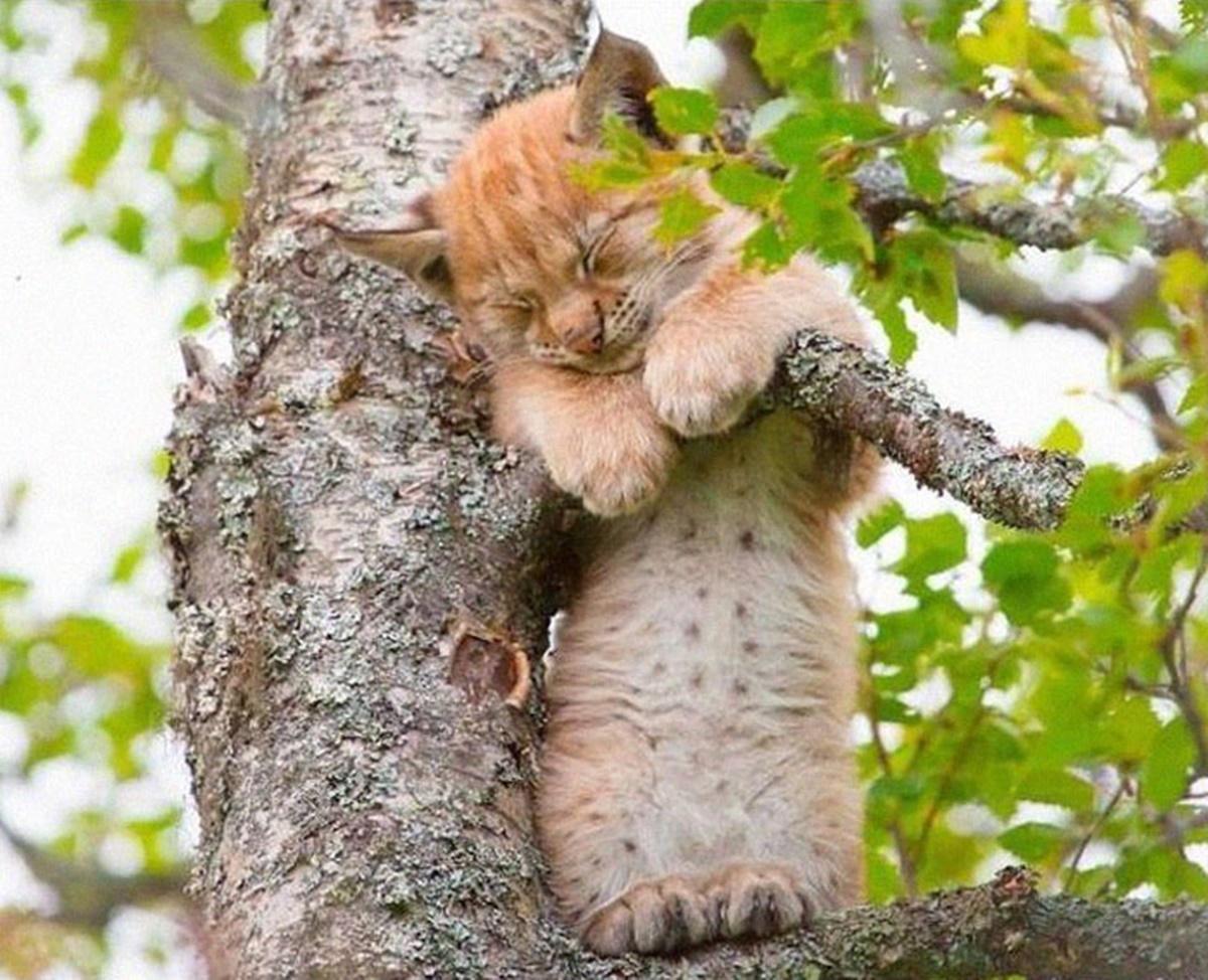 gatto si arrampica e dorme