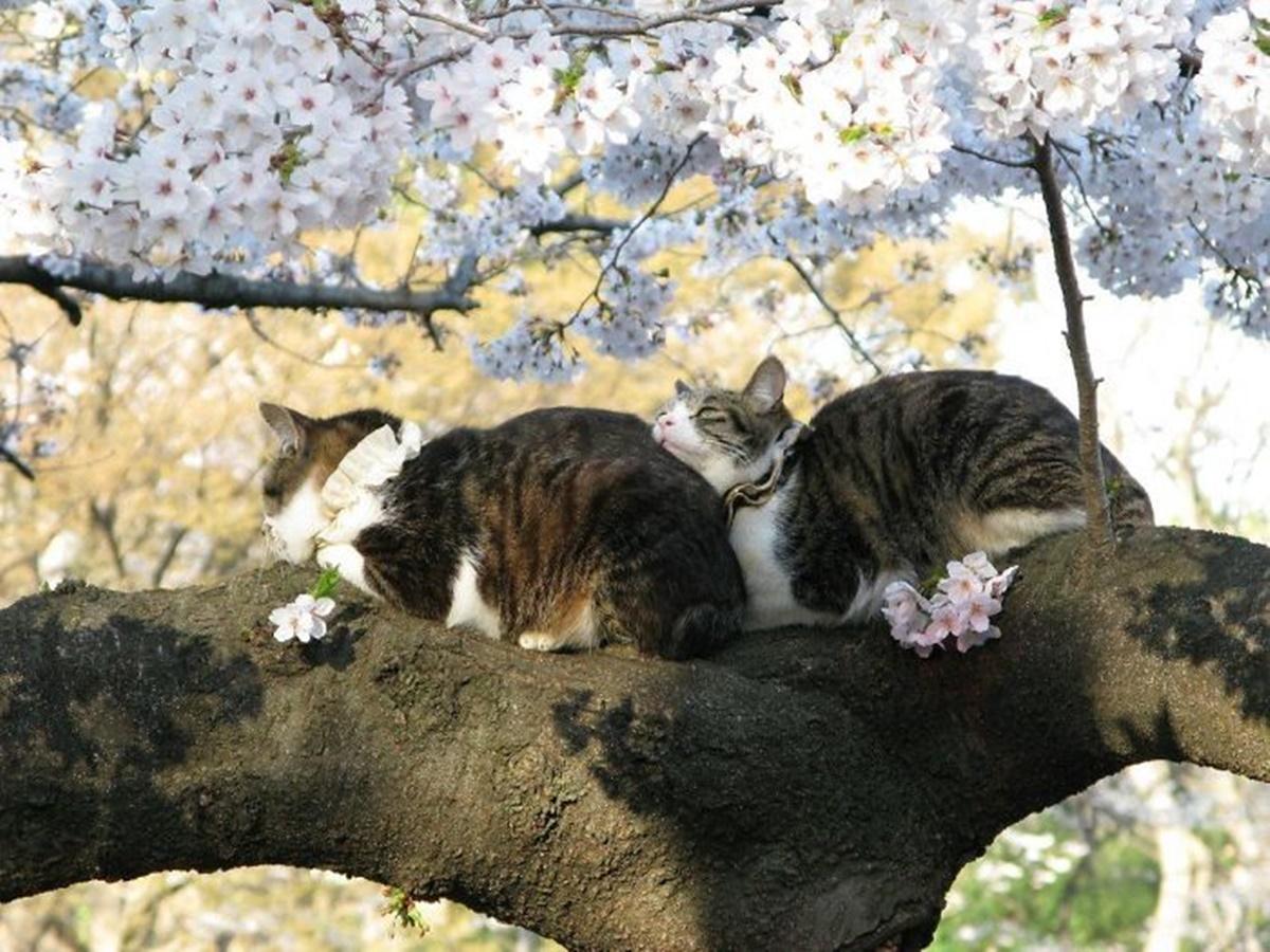 gatti tra i fiori