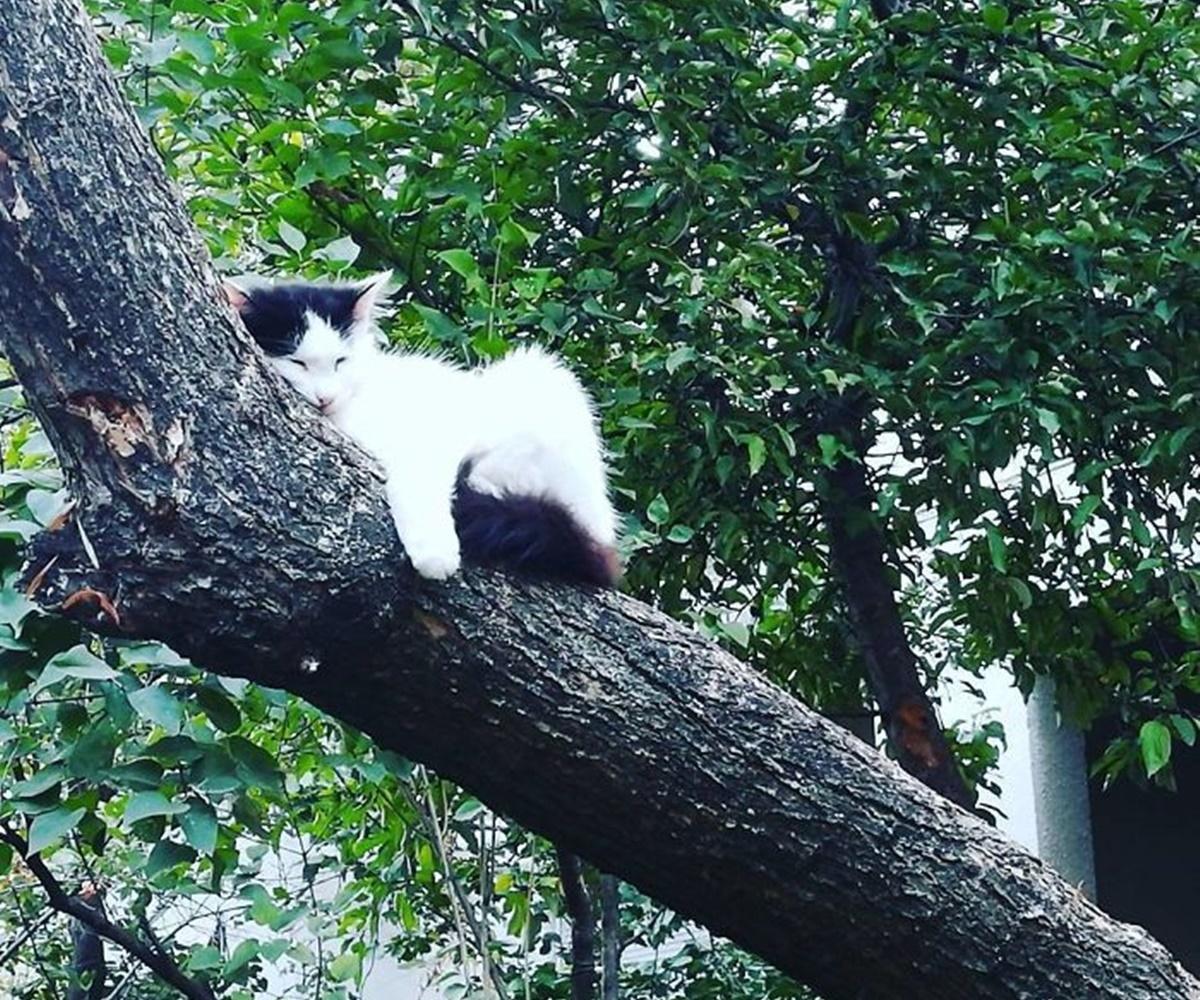gatto in pendenza