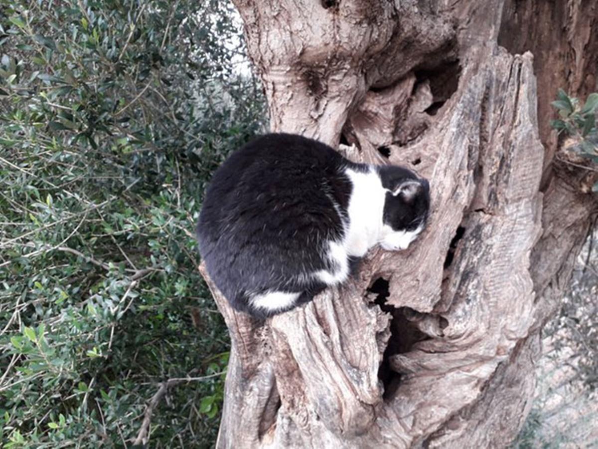 gatto su ramo con buco