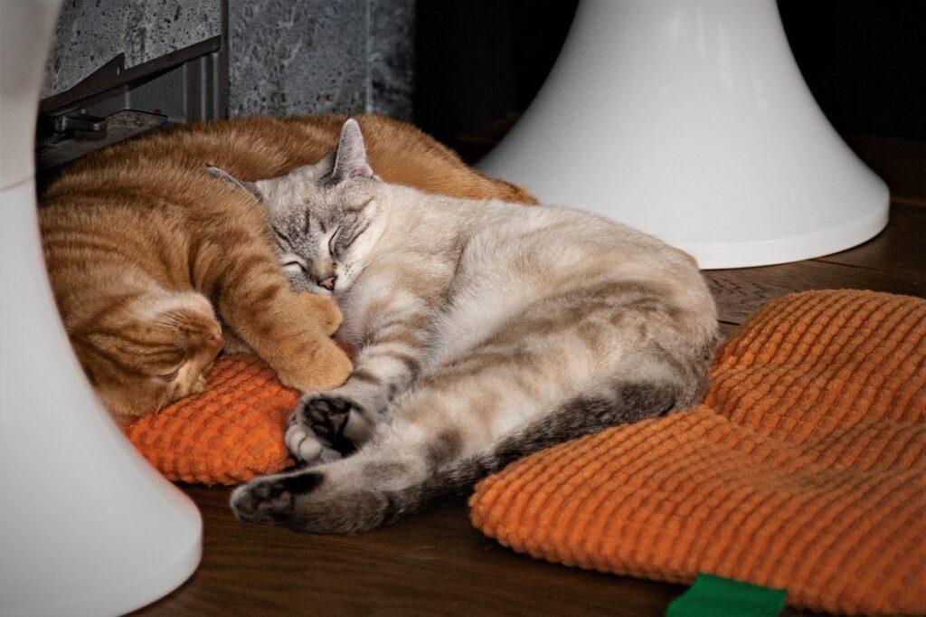 gatti si riposano
