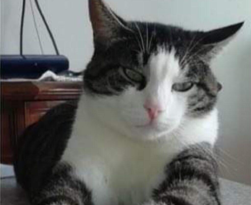 gatto soriano disteso su tavolo