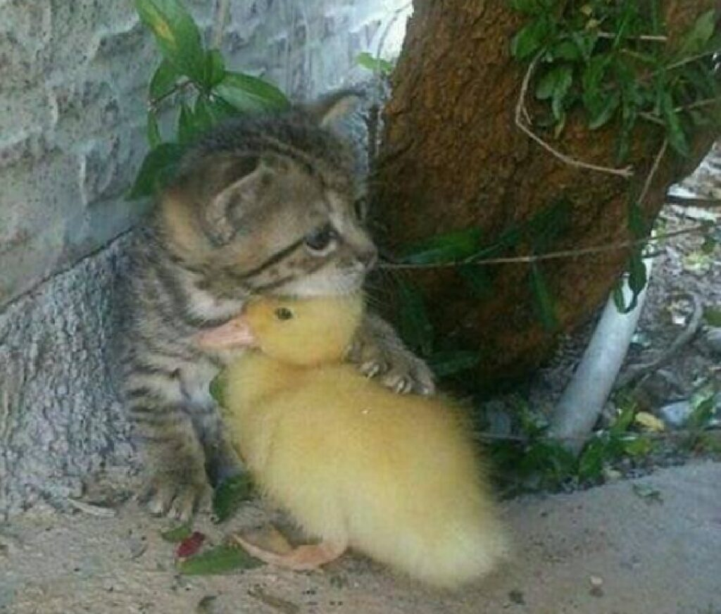 gatto amore fraterno altro animale