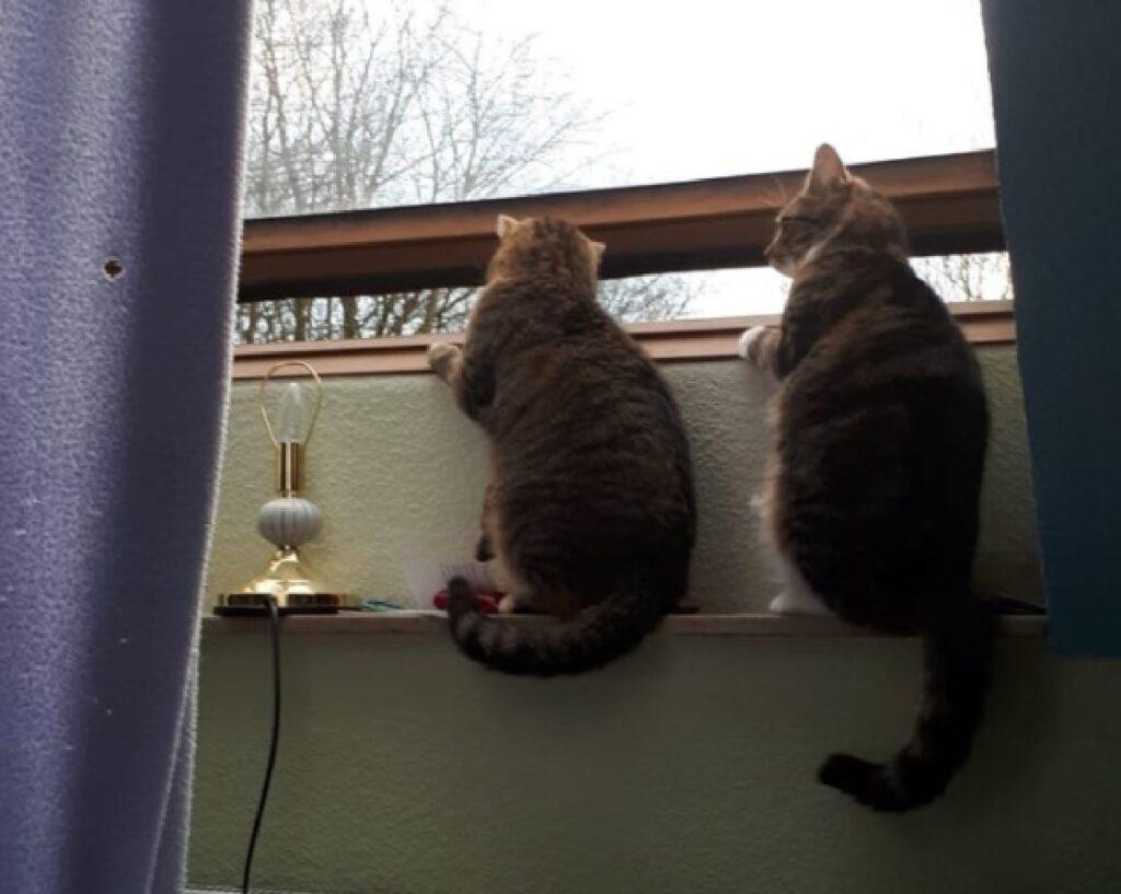 gatto balconcino coppia curiosa