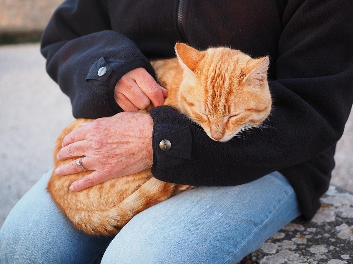 padrone accarezza gatto