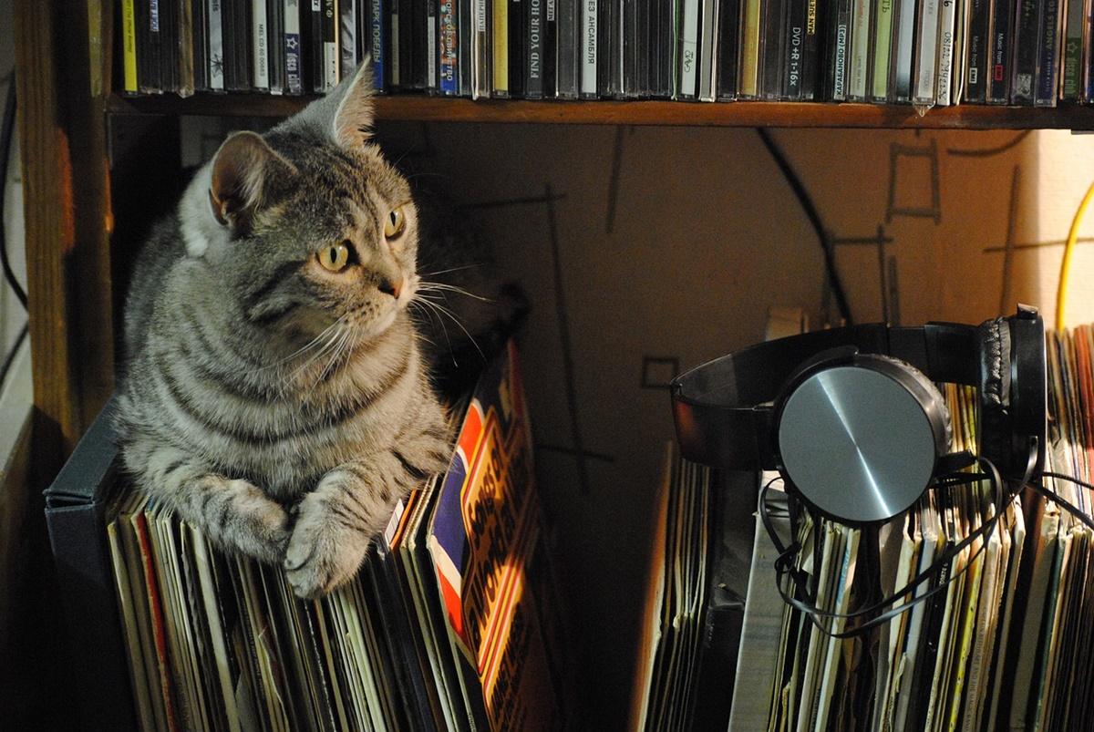 gatto musica