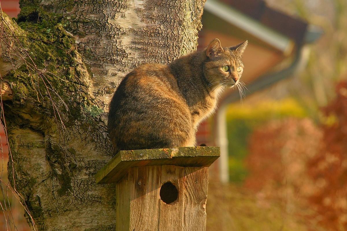 gatto su casetta