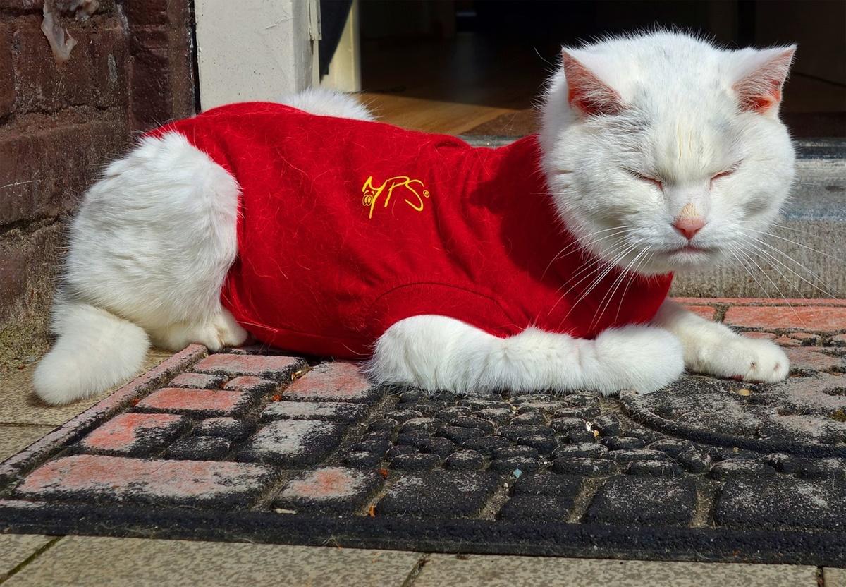 gatto vestito