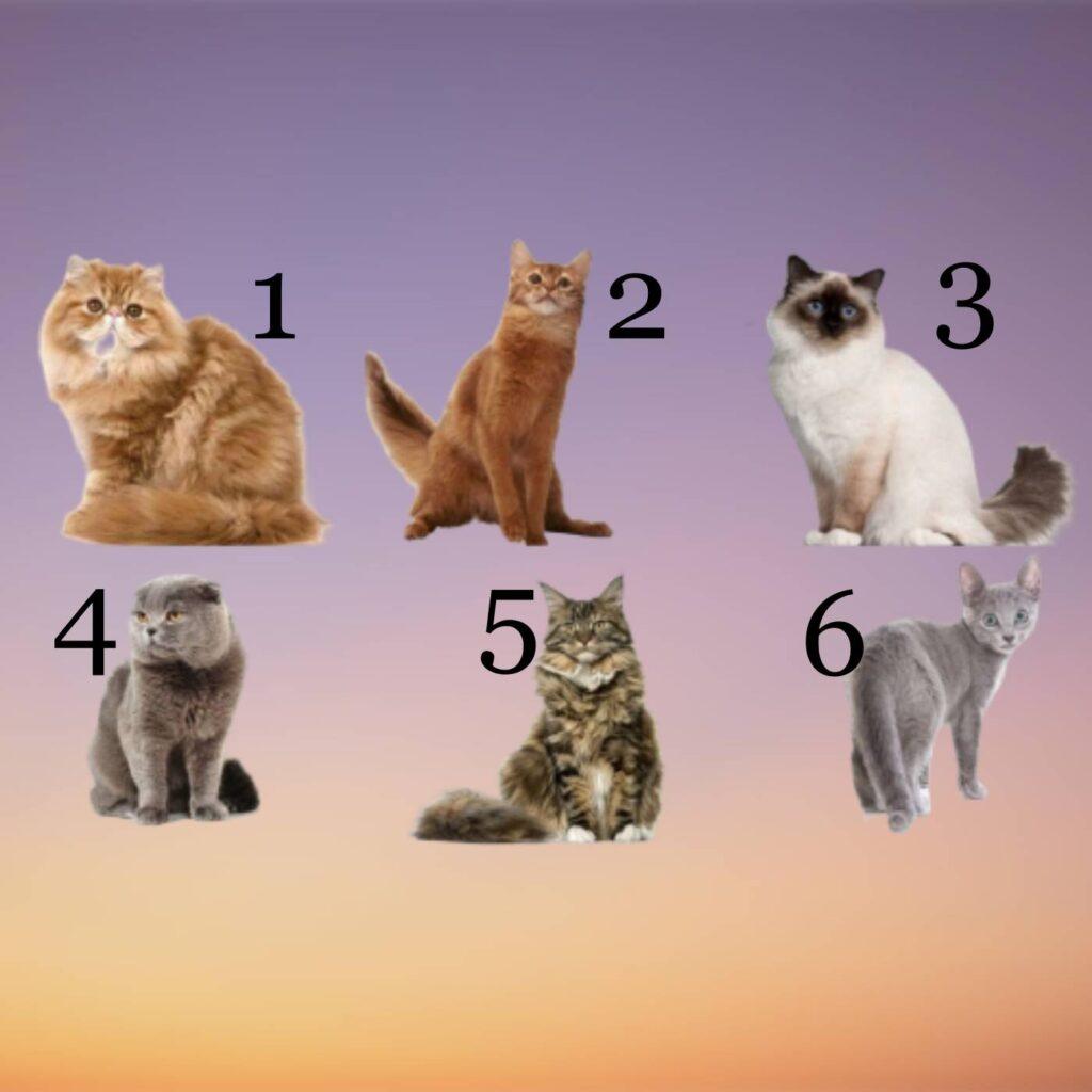 gatti con numeri