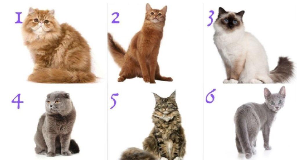 gatti numerati sfondo bianco