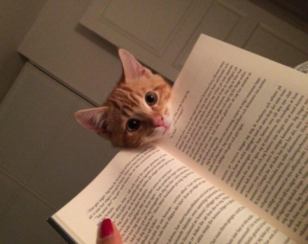 gatto testolina su libro da leggere