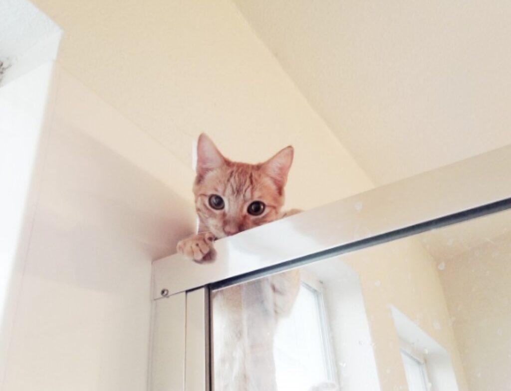 gatto doccia spione sopra