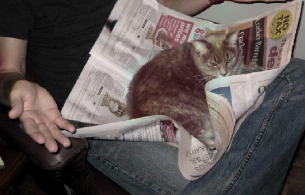 gatto sopra giornale lettura