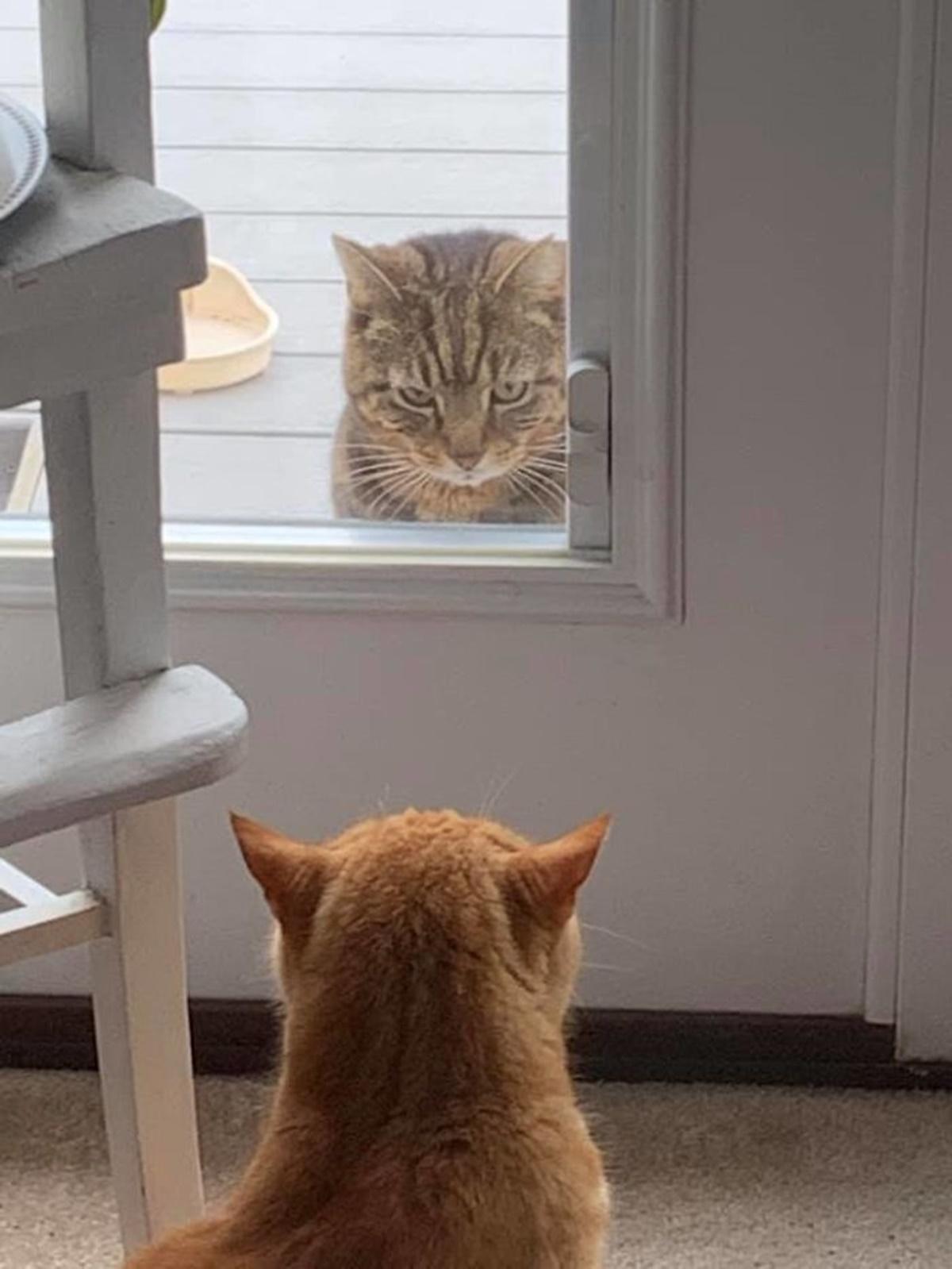 gatti si guardano