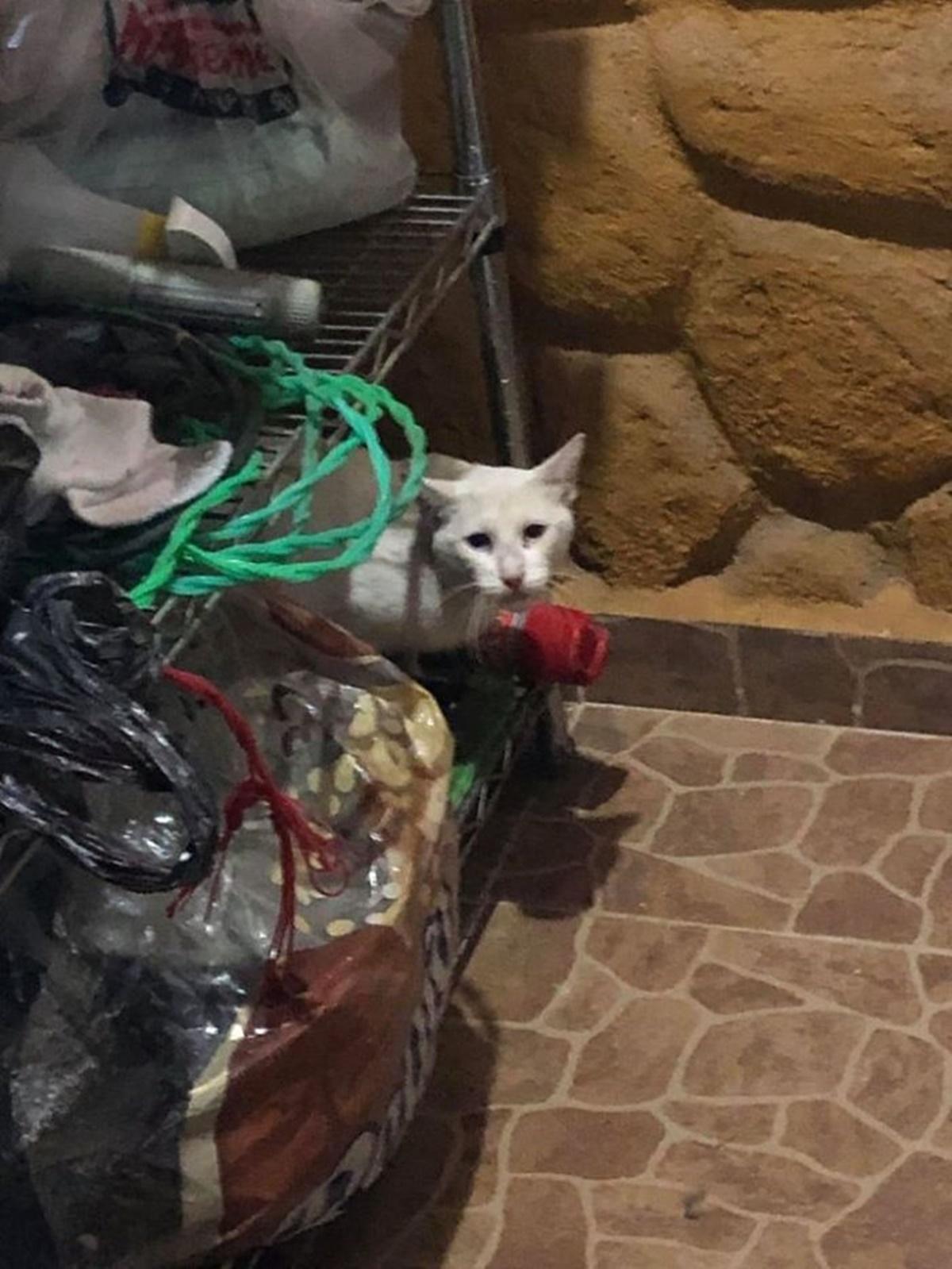 gatto in lavanderia