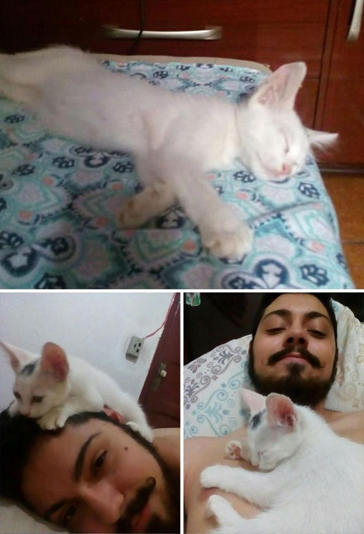 gatto dorme
