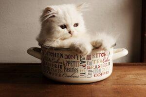 gatto cesto