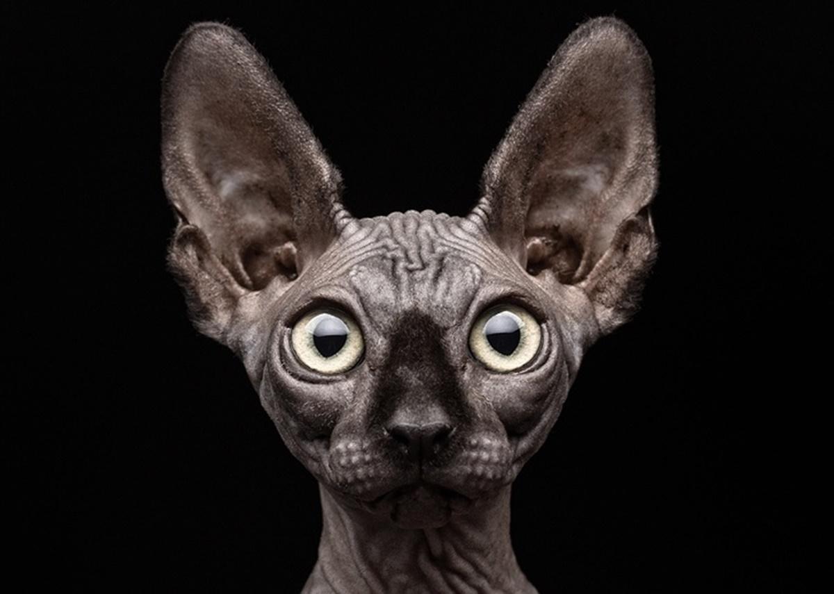 gatto sguardo