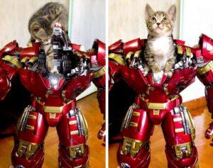 gatto ironman