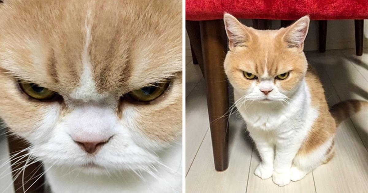 gatto tavolo