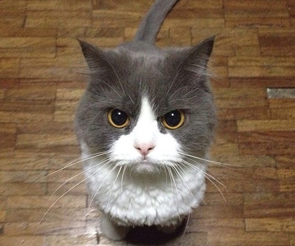 gatto pappa