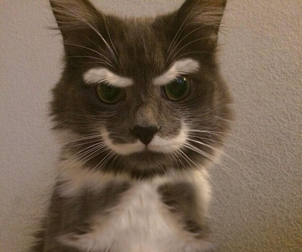 gatto baffi