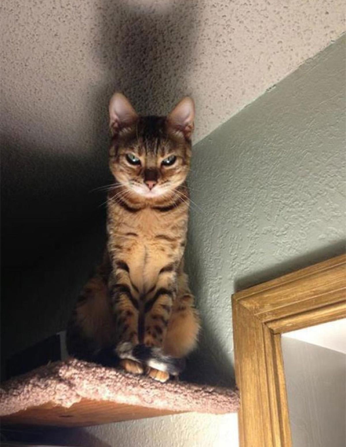gatto tenebre