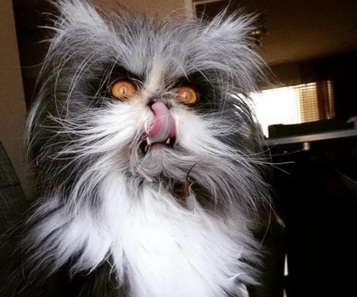 gatto lecca baffi