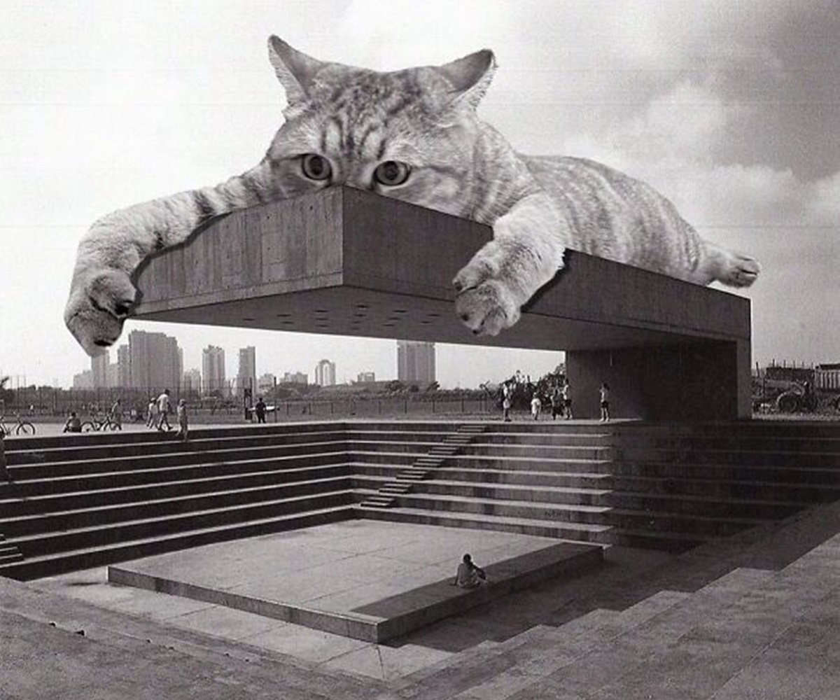 gatto si appende