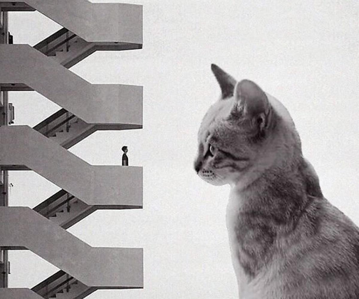 gatto parla umano