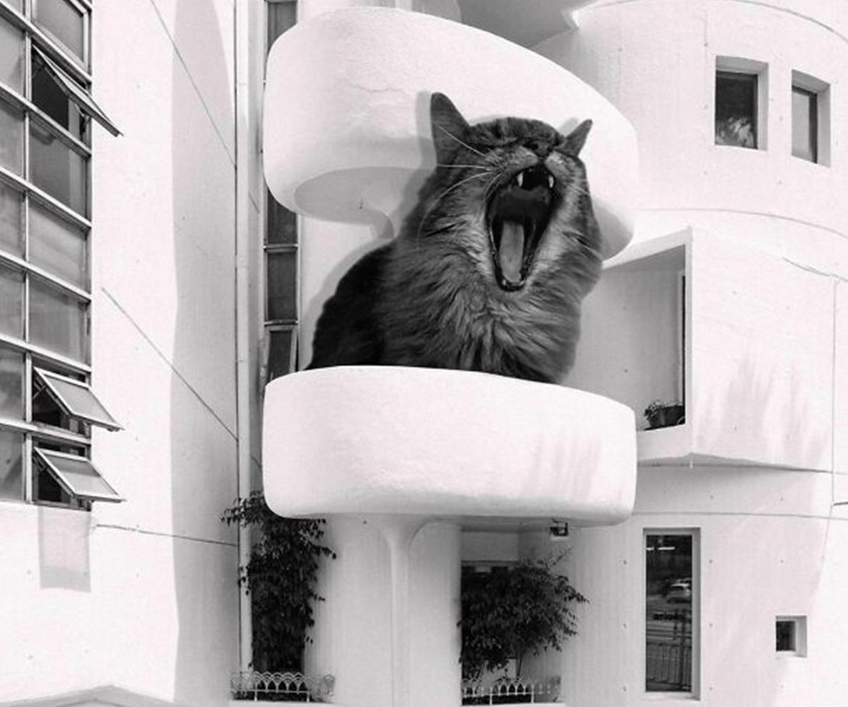 gatto miagola