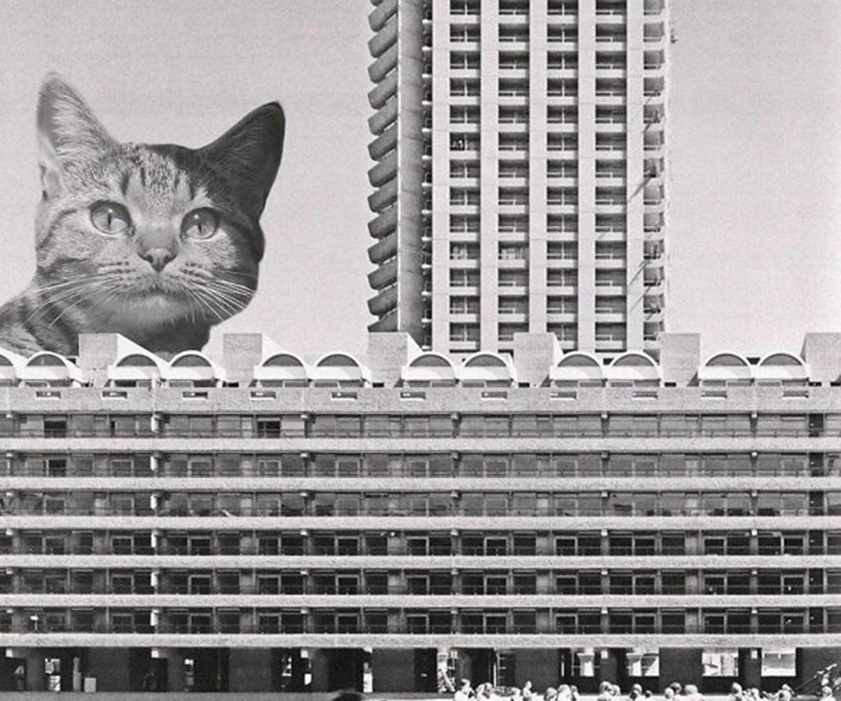gatto sbircia