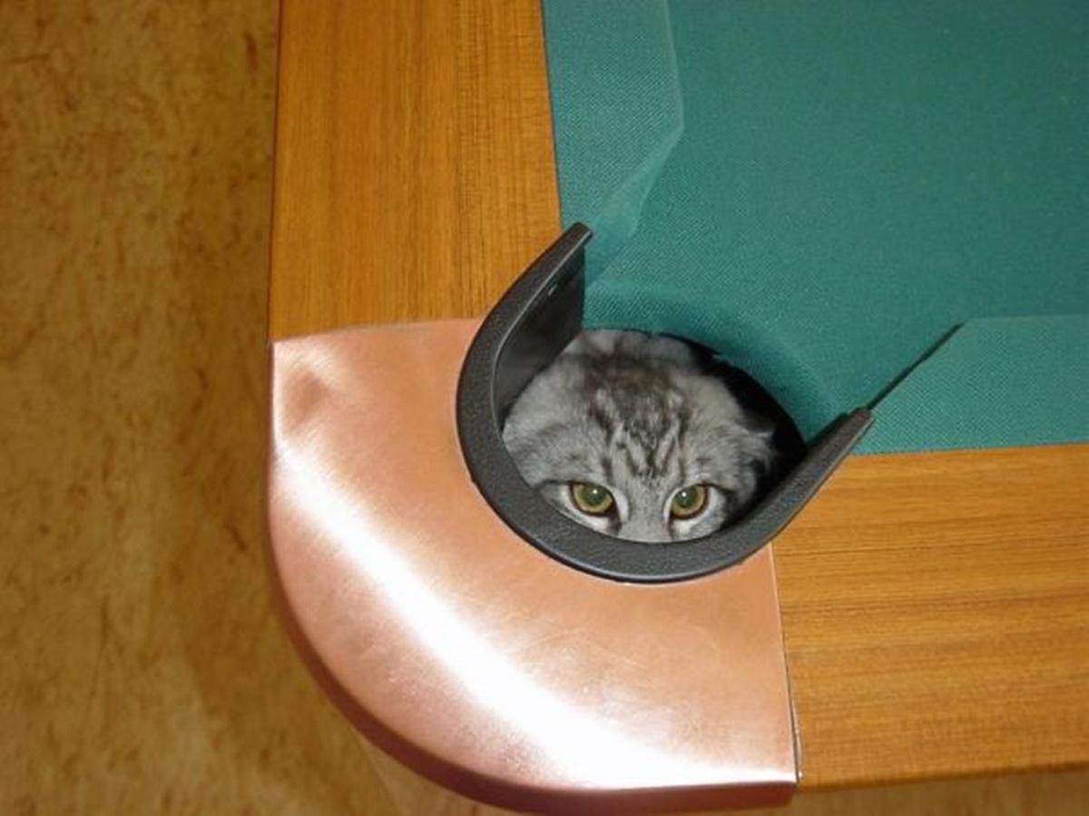 gatto buca