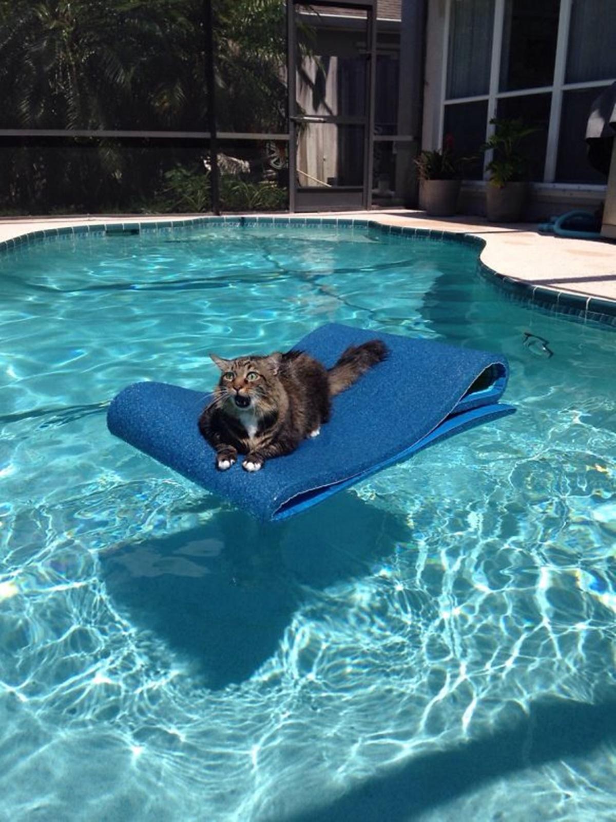 gatto piscina