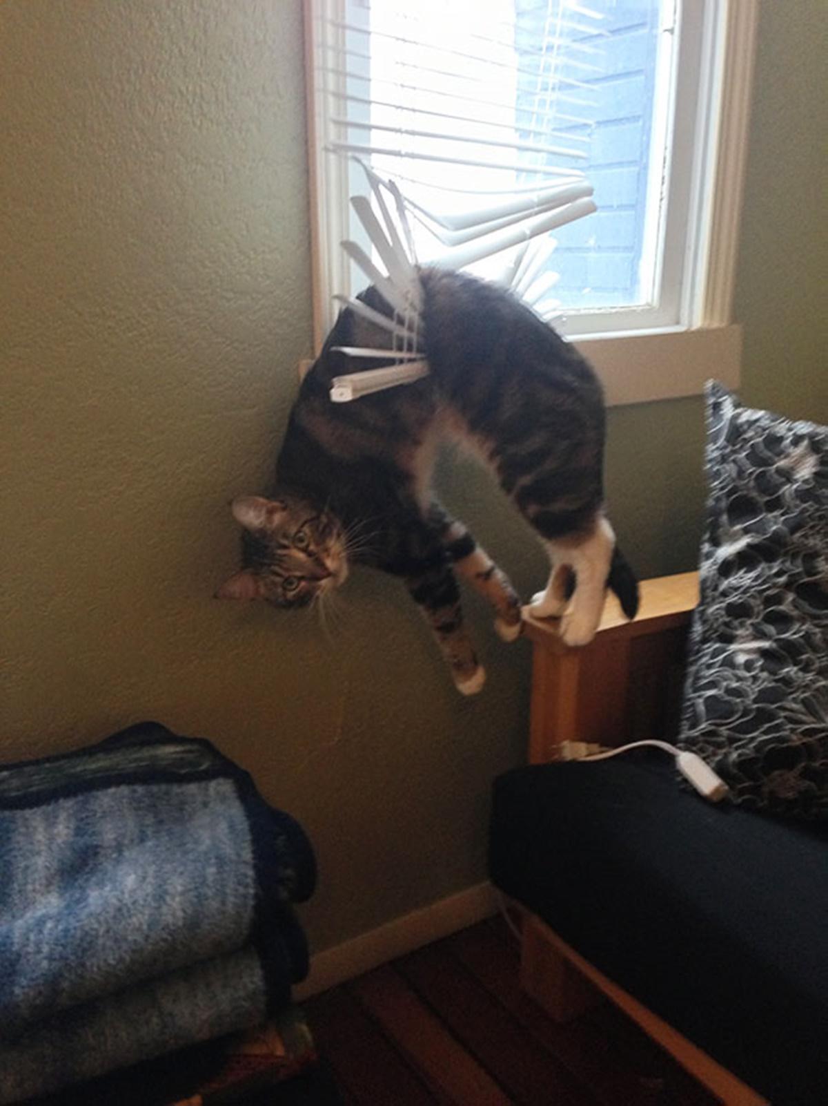 gatto nella tapparella