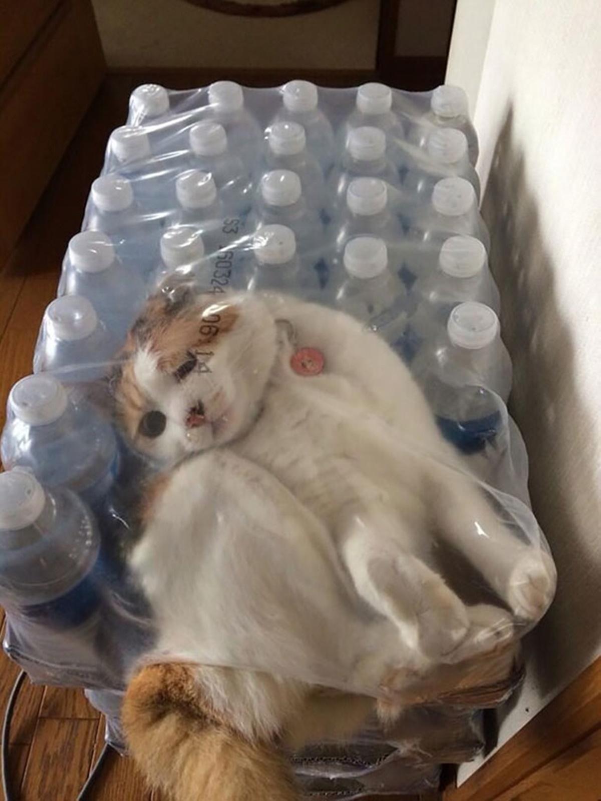 gatto acqua