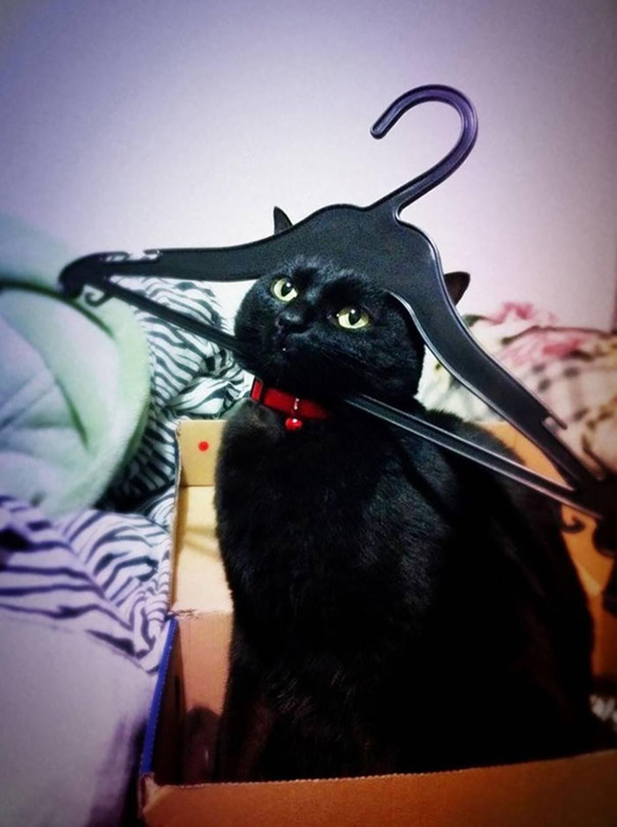 gatto gruccia
