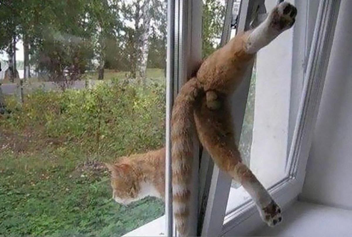 gatto incastrato nella finestra
