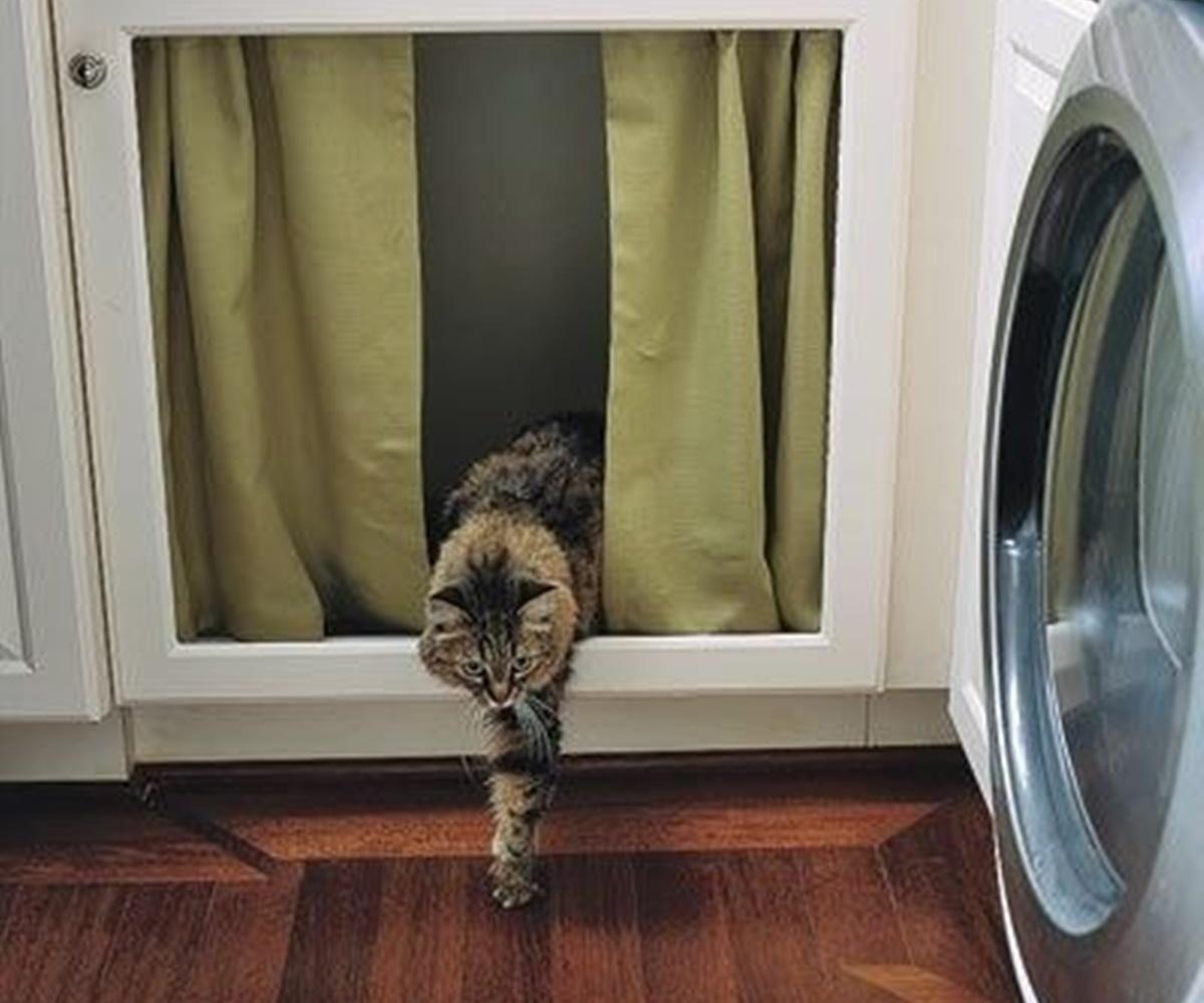 tenda gatto