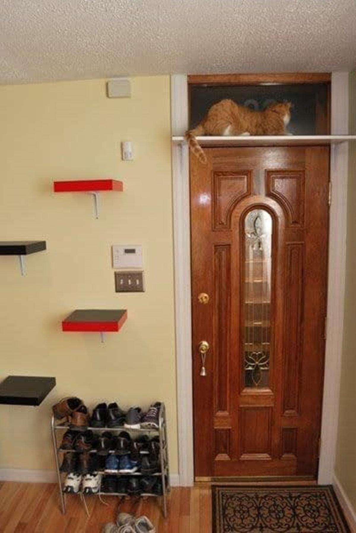 gatto scaletta