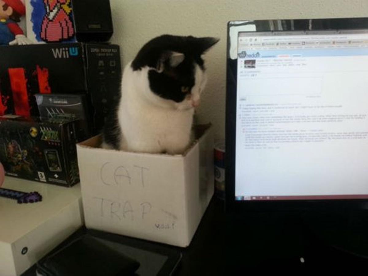 gatto tastiera