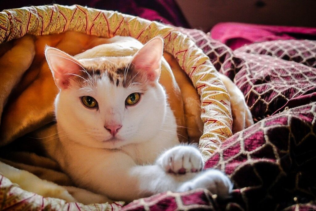 gatto cuccia tenero