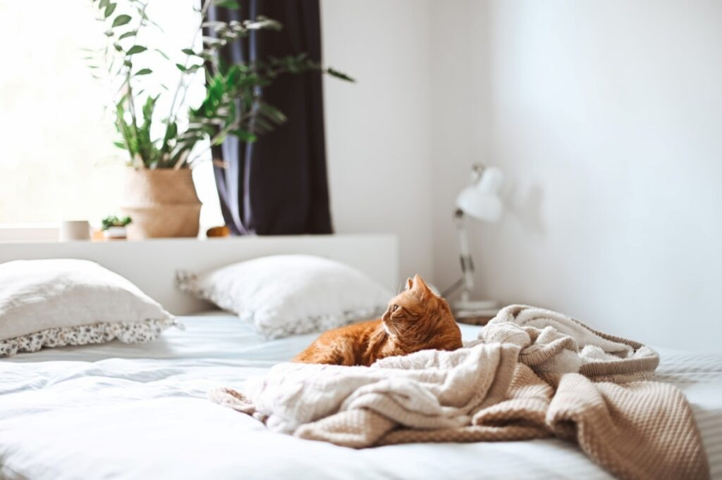 micio gatto letto