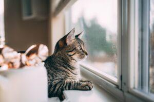 gattino finestra riflesso