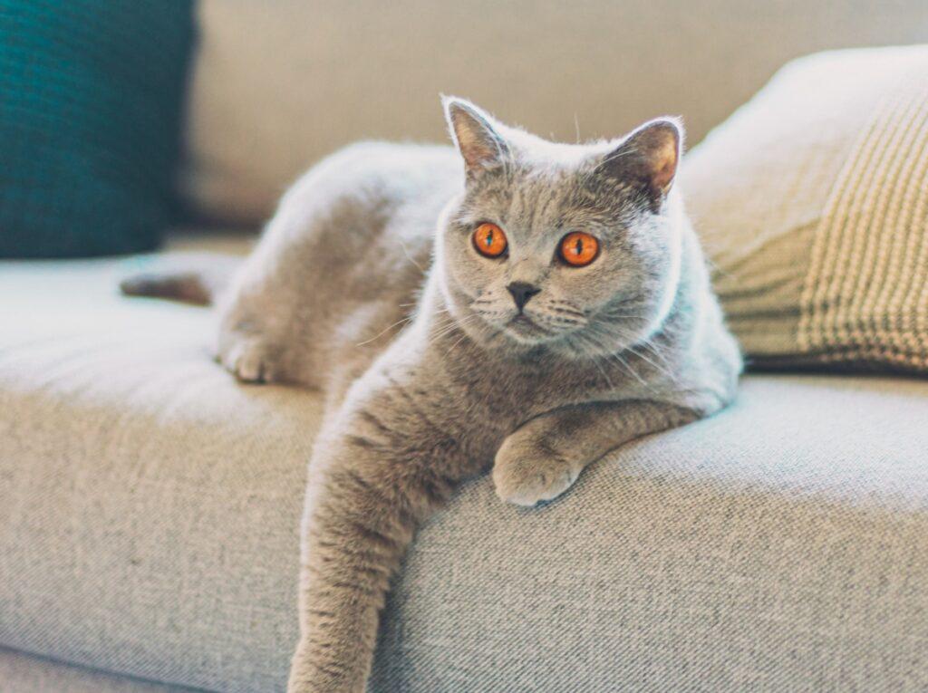 gatto divano relax